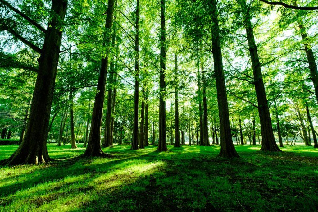 新緑に輝く公園の木々