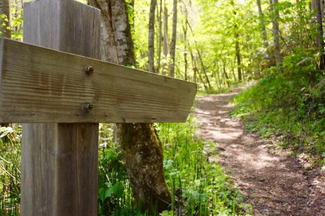 林の中を進む道
