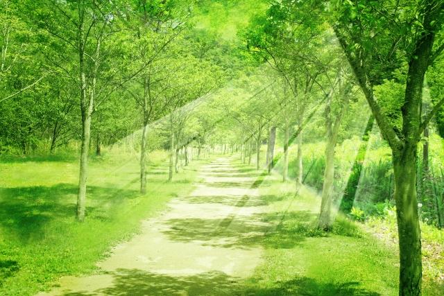 光り輝く森の道