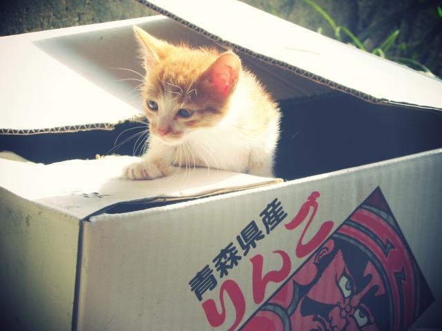 箱にはいった子ネコ