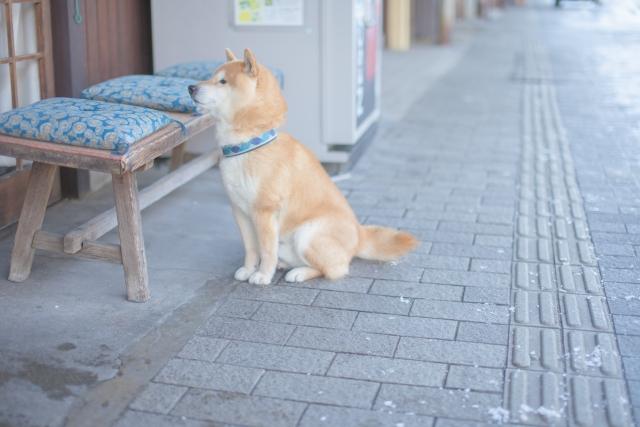 おとなしい犬